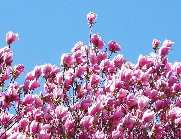 Flowers Plants Landscapes Nature Sunlight Sunshine