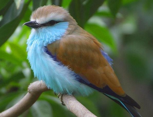 Bird Fowl Azure Nature Countryside Blue Animals Fa