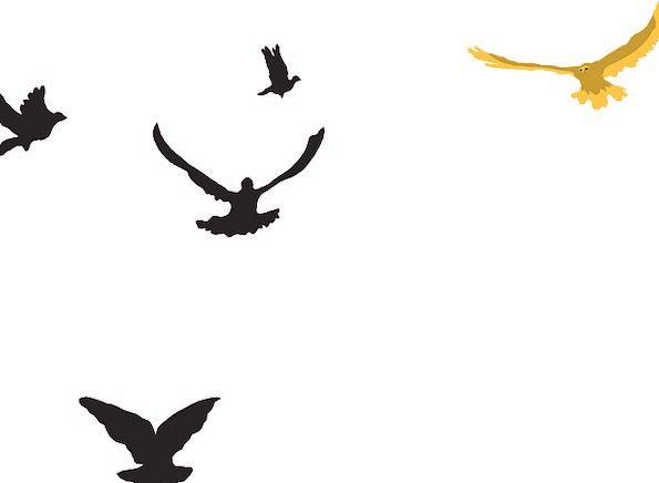 Yellow Creamy Dark Birds Natures Black Sky Blue Fl