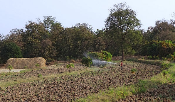 Tilled Land Landscapes Nature Mango Trees Hay Stac