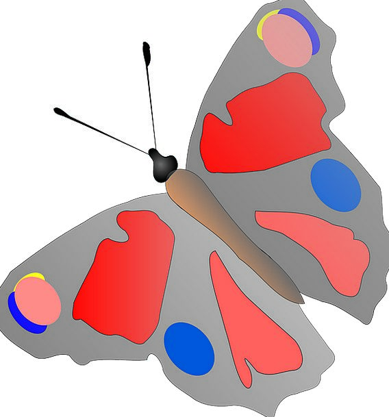 Butterfly Bug Multicolored Rainbow Insect Spots Ac