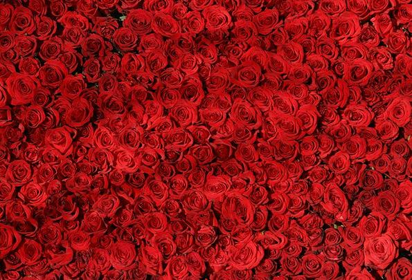 Rose Design Designs Flowers Plants Roses Red Blood