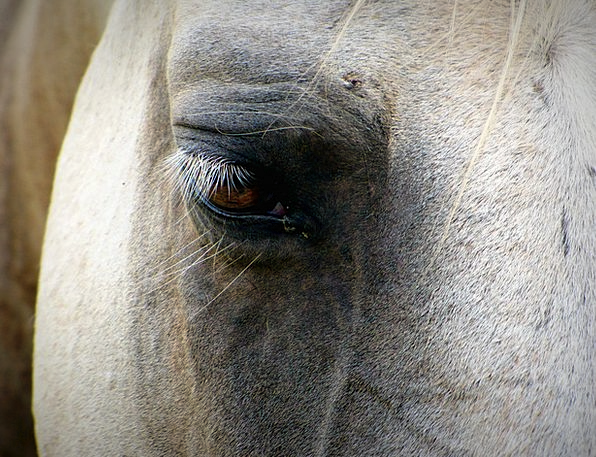 Horse Mount Expression Eye Judgment Face Mare Stal