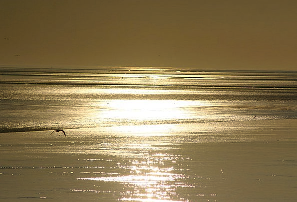 Sea Marine Vacation Travel Beach Seashore Ameland