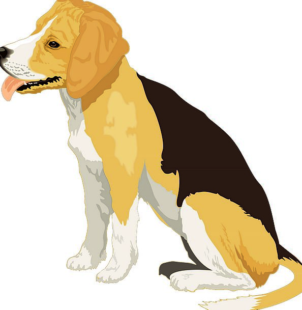 Black Dark Creamy Dog Canine Yellow Free Vector Gr