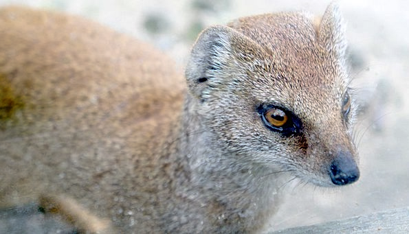 Weasel Physical Wild Rough Animal Wildlife Nature