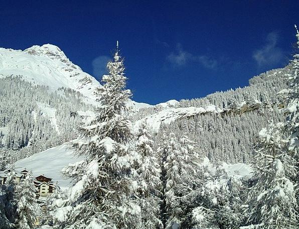 Winter Season Trees Plants Snow Landscape Fir Fore