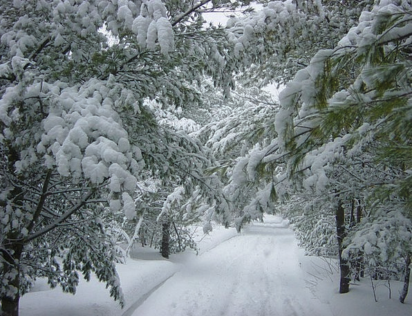 Winter Season Landscapes Snowflake Nature Trees Pl