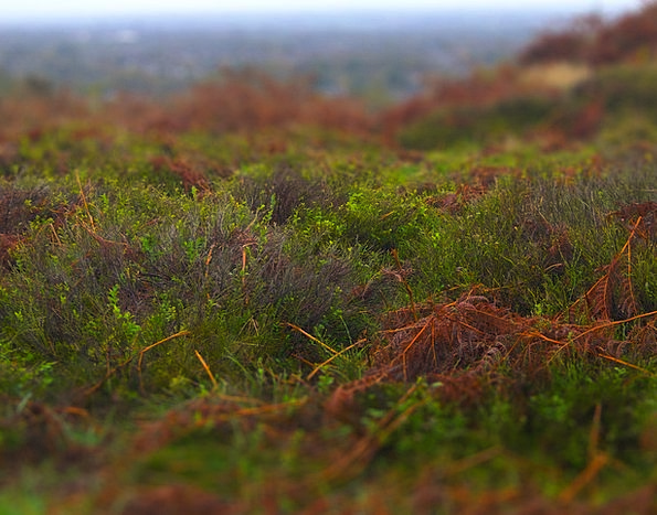 Autumn Fall Hazy Damp Dank Misty Cover Mossy Moss-