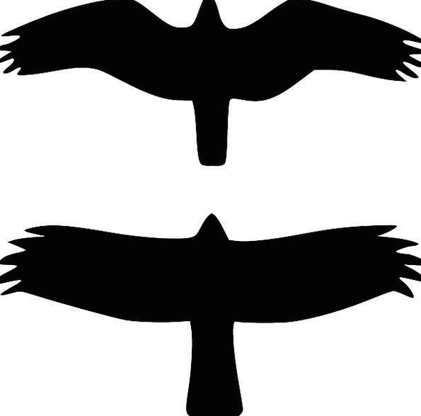 Birds Natures Outline Black Dark Silhouette High F
