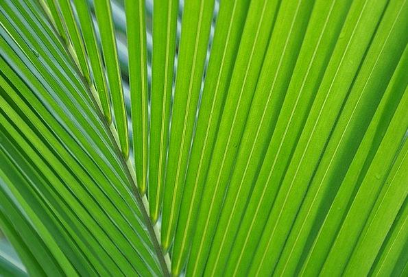 Palma Landscapes Foliage Nature Green Lime Leaf Na