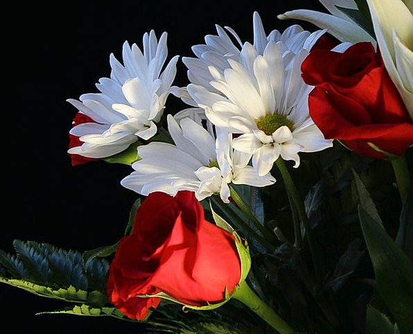 White Daisys Landscapes Nature Floral Flowery Red