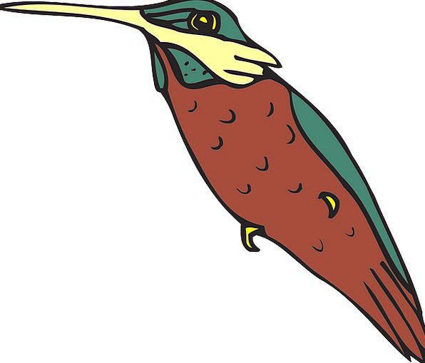 Hummingbird Fowl Wings Annexes Bird Beak Bill Feat