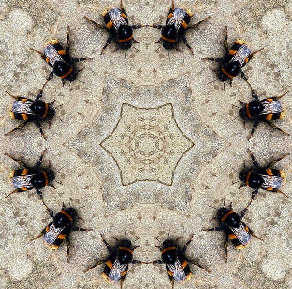 Insects Bugs Kaleidoscope Phantasmagoria Bumblebee