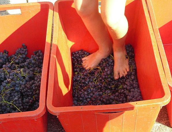 Grape Harvest Bases Verona Feet Grape Stomping Sta