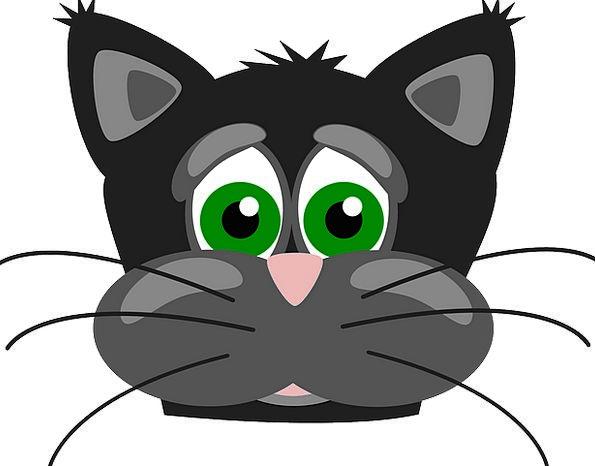 Cat Skull Face Expression Head Feline Animal Physi