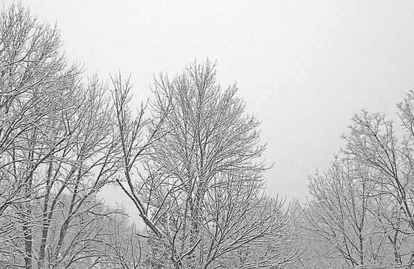 Trees Plants Landscapes Twigs Nature Snow Snowflak