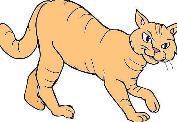 Cat Animal Physical Walking Hunting Shooting Free