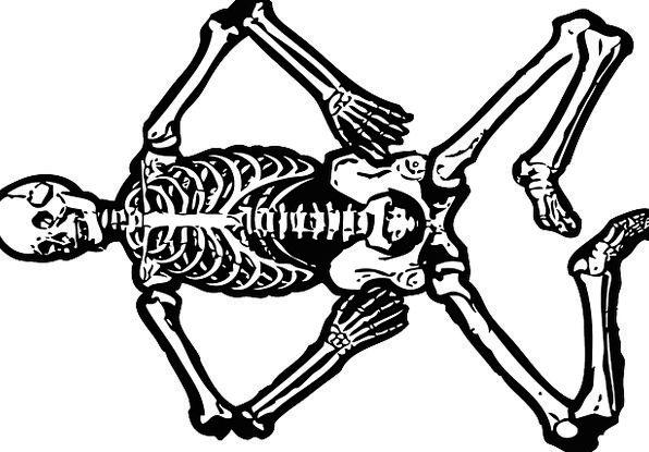 Skeleton, Minimum, Deceased, Skull, Mind, Dead, Bones, Frames, Body ...