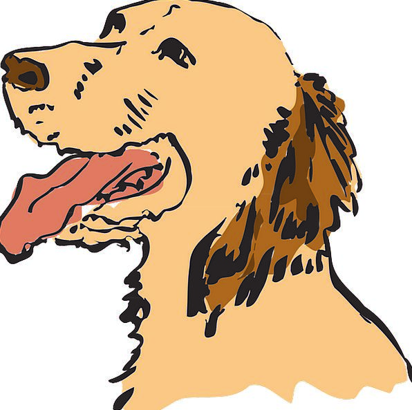 Dog Canine Domesticated Animal Physical Pet Tired