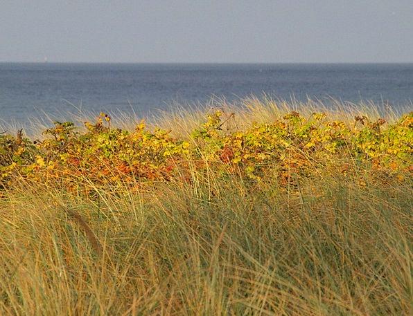 Dune Bank Sea Marine Baltic Sea Dune Grass Coast C