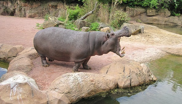 Zoo Hannover Hippo Adventure Zoo Lower Saxony
