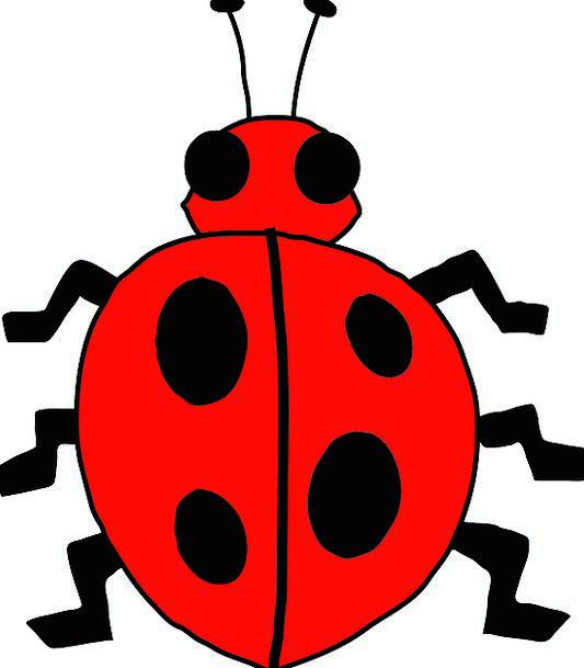 Ladybug Beetle Ladybird Garden Insect Animal Cute