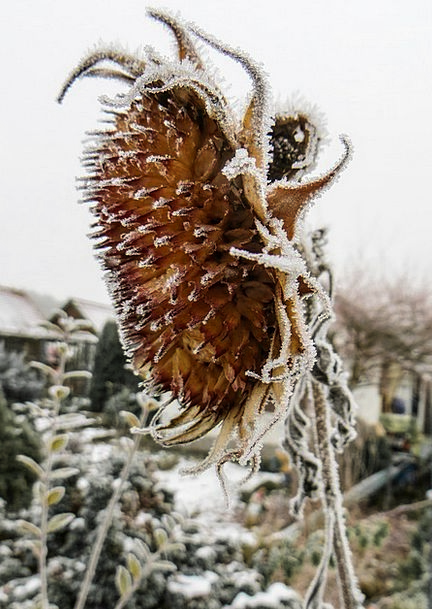Sun Flower Landscapes Ice-covered Nature Winter Se