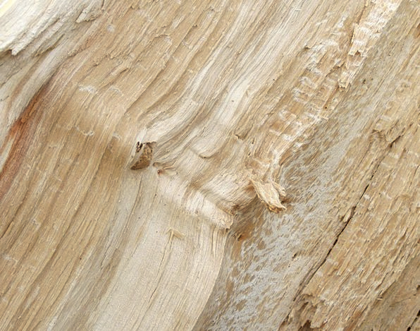 Tree Sapling Textures Feel Backgrounds Wood Timber