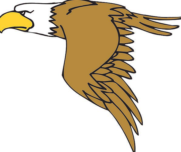 Eagle Fowl Flying Hovering Bird Wings Annexes Free