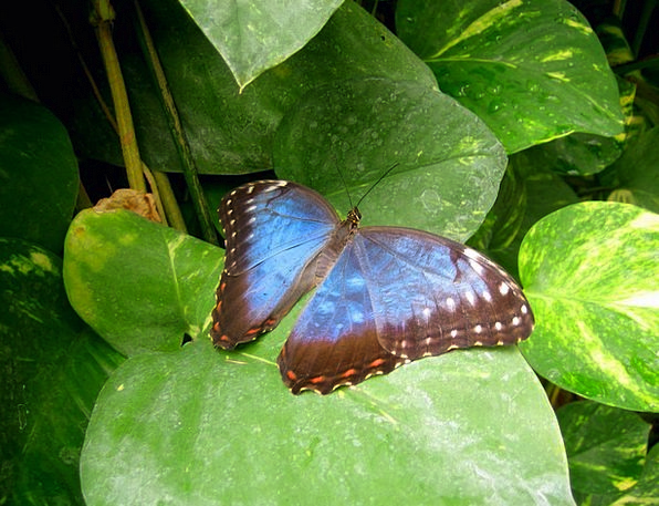 Butterfly Azure Green Lime Blue Leaves Greeneries