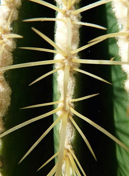 Golden Ball Cactus Landscapes Nature Cactus Greenh