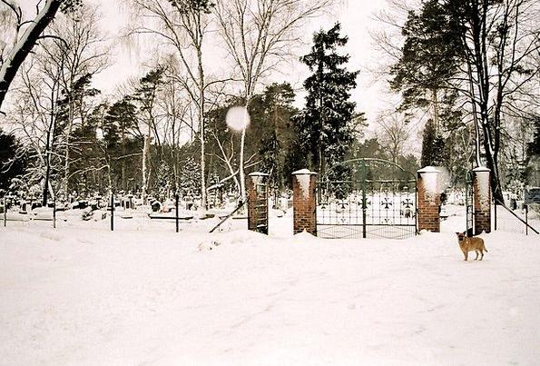 Cemetery Season Graveyard Winter Poland Grave Seri