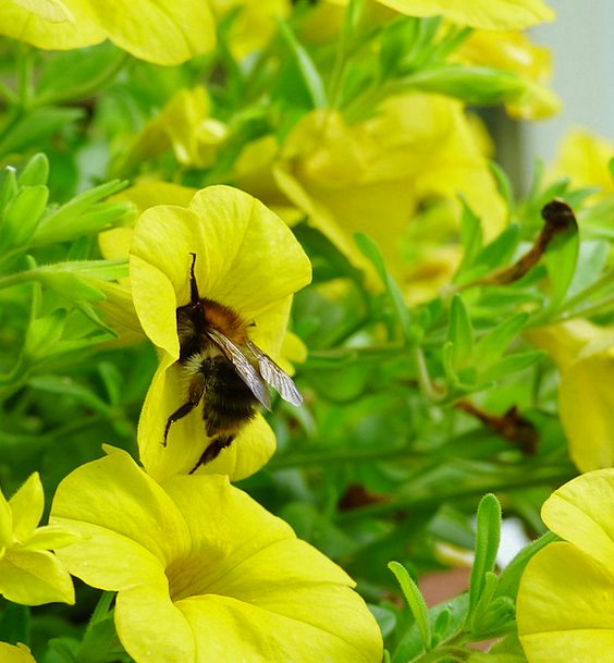Bee Landscapes Germ Nature Nature Countryside Bug