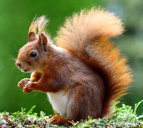 Squirrel Collector Physical Cute Attractive Animal