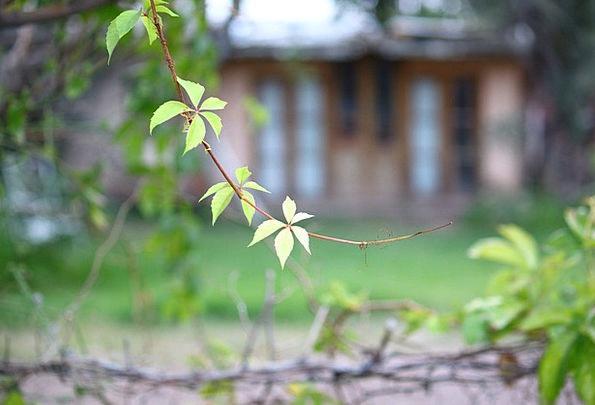 Vine Creeper Landscapes Vegetable Nature Leaf Foli