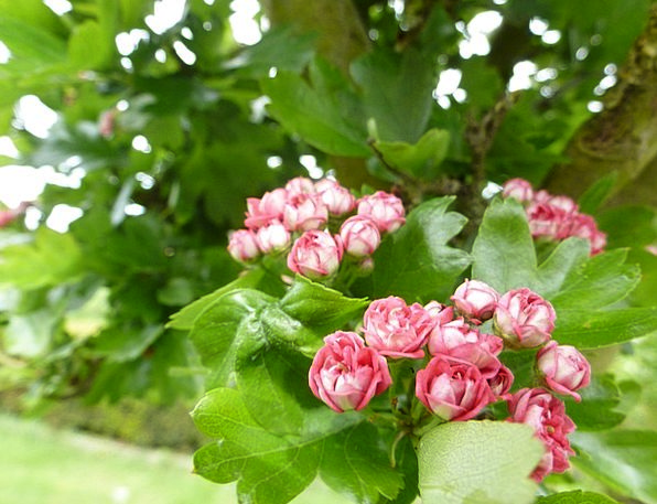 Flower Floret Landscapes Countryside Nature Garden