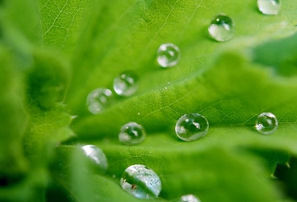 Leaf Foliage Landscapes Nature Water Aquatic Drops