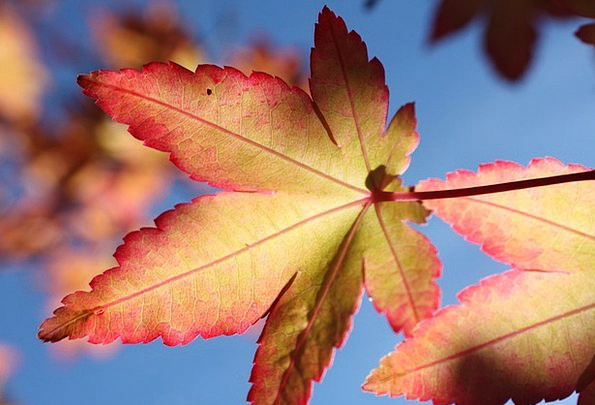 Leaf Foliage Landscapes Azure Nature Autumn Blue E