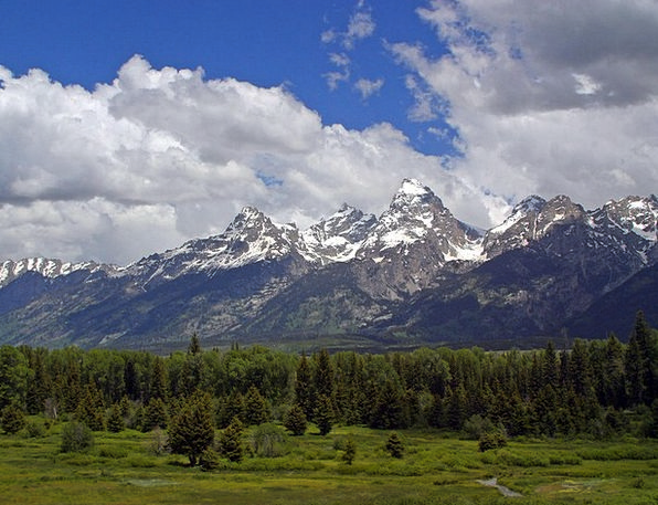 Grand Teton Flowers Landscapes Nature Usa Wyoming