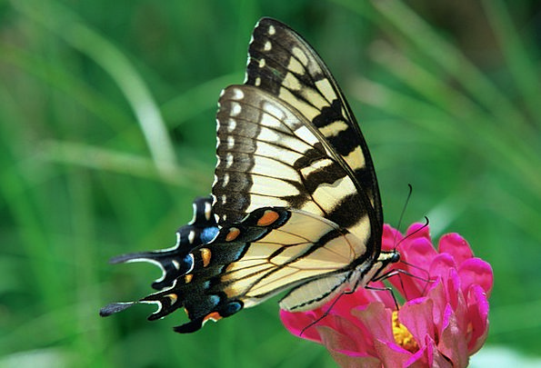 Swallowtail Landscapes Nature Nature Countryside B