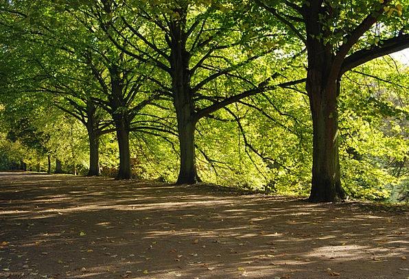 Trees Plants Shaded Green Lime Shady Shadow Gumsho