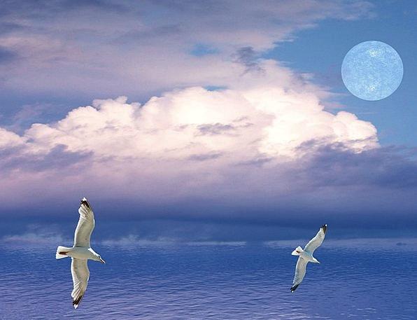 Seagulls Landscapes Natures Nature Flying Hovering