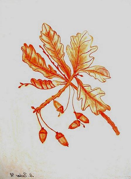 Acorns Craft Division Industry Tree Sapling Branch