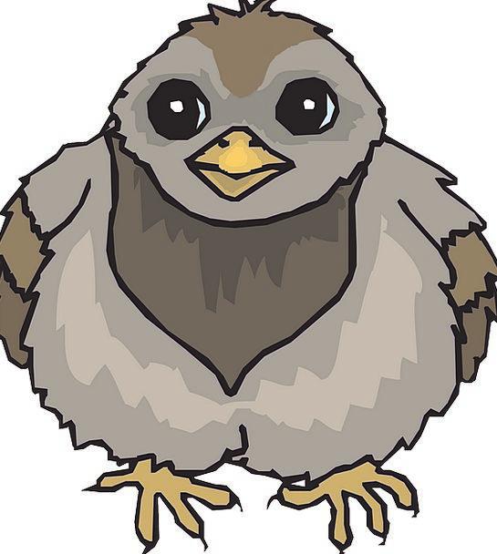 Baby Darling Fowl Wings Annexes Bird Pigeon Mark F