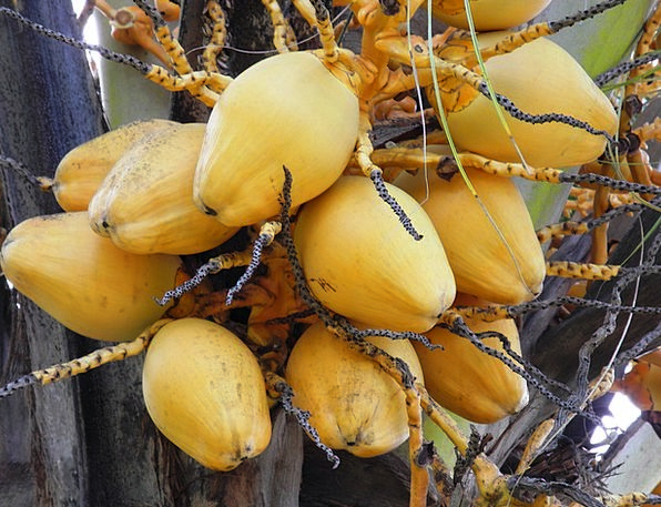 Bread Fruit Drink Ovary Food Exotic Unusual Fruit