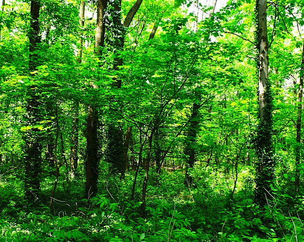 Trees Landscapes Foliage Nature Woods Greenery For