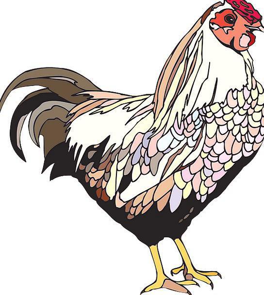 Bird Fowl Cowardly Hen Chicken Standing Female Fem