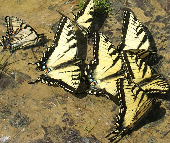 Butterfly Physical Nature Countryside Animal Group