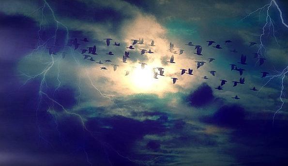 Birds Natures Fly Hover Migratory Birds Fantasy Bi